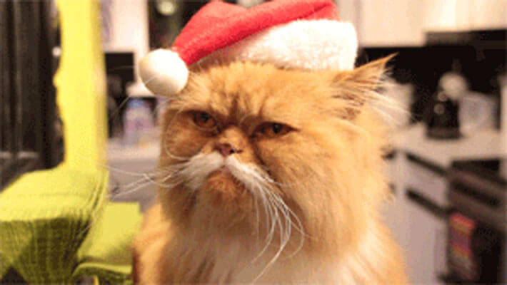 blog-post-christmas-angry-cat